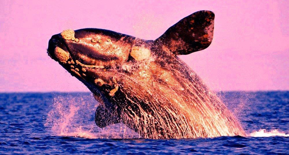 Avistaje de Fauna Marina en el Golfo San Matías
