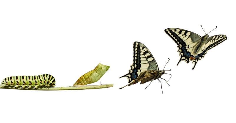 El poder de transformar