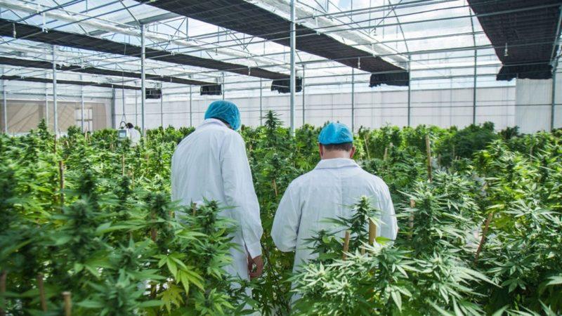 Nación presentó el proyecto para regular el desarrollo de la industria del cannabis medicinal y el cáñamo industrial