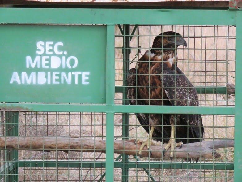 Se realizó procedimiento para retirar aves silvestres enjauladas